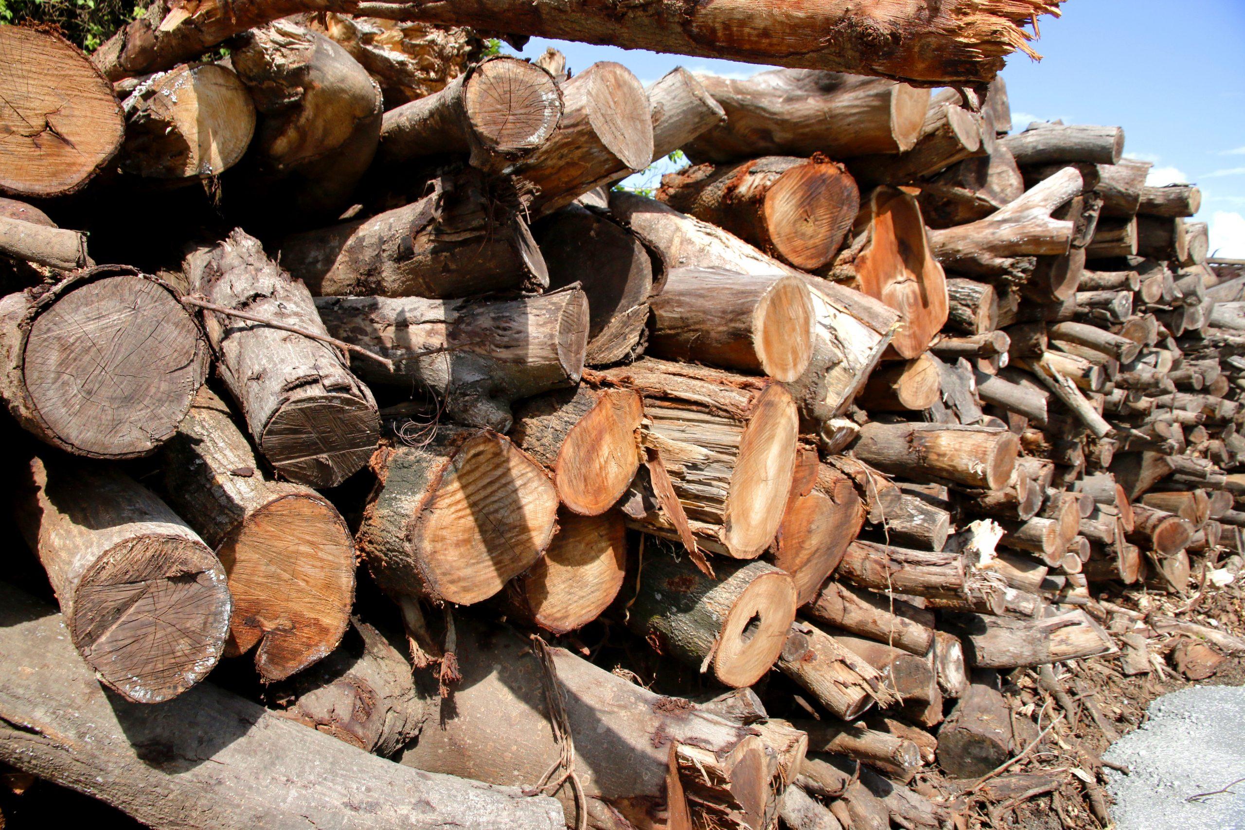 香港木庫 回收榻樹 造傢具