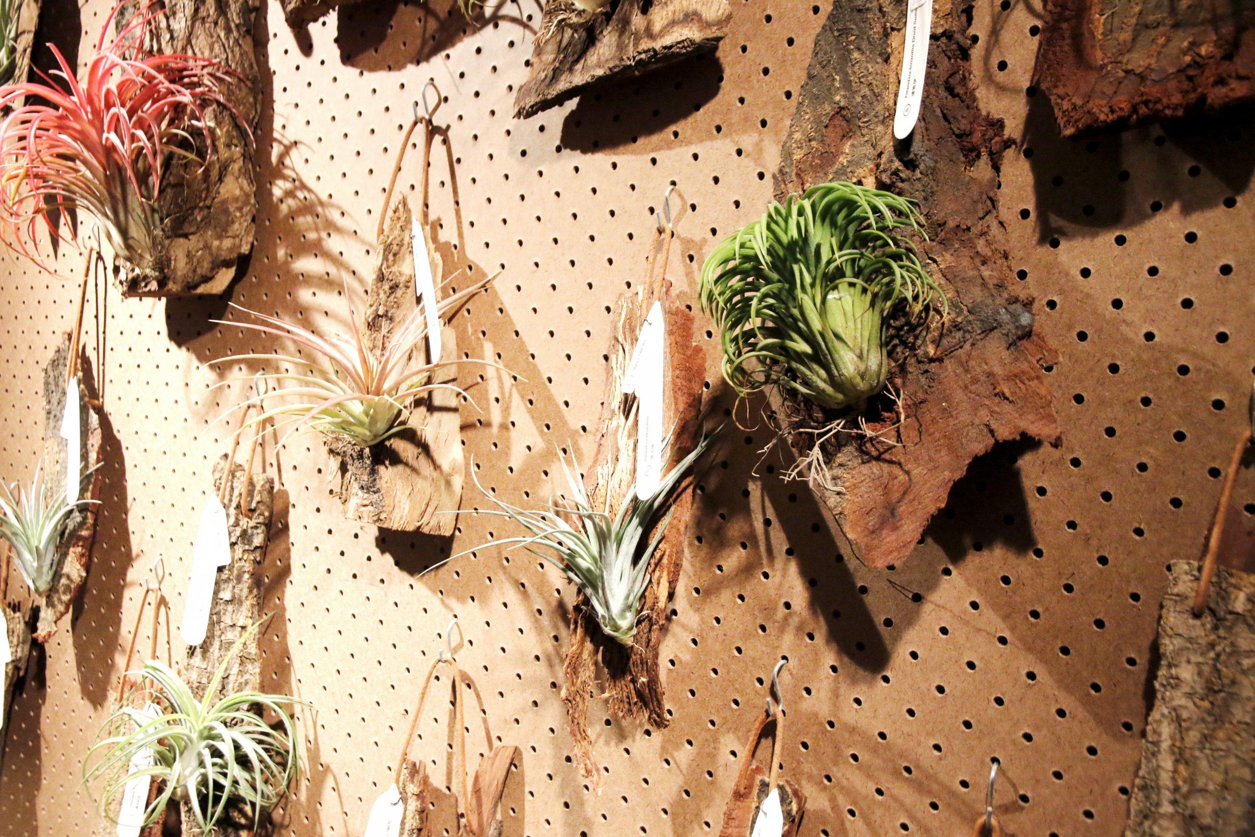香港木庫 回收榻樹 造傢具 掛飾
