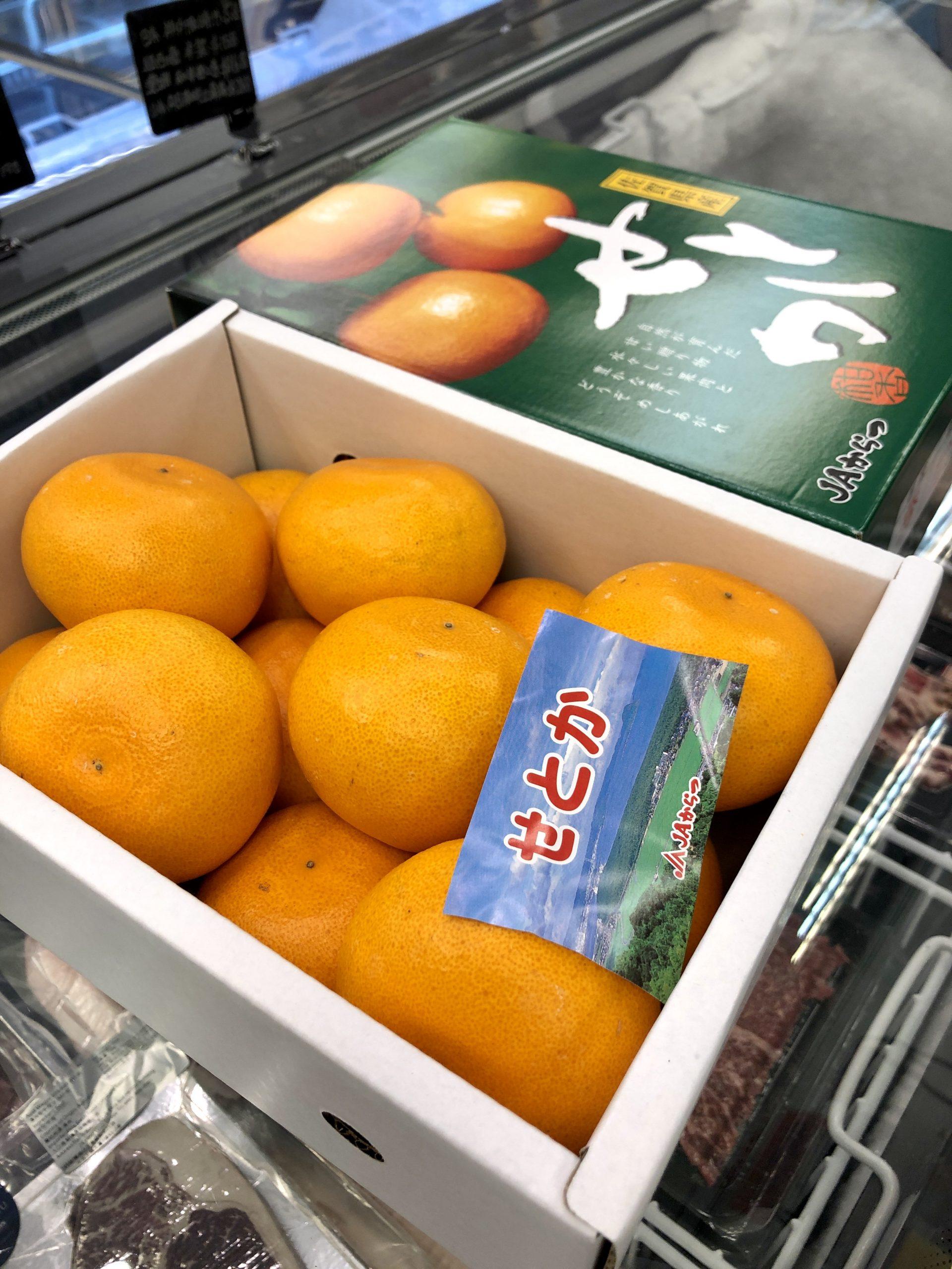 佐賀縣瀨戶香柑橙 日本