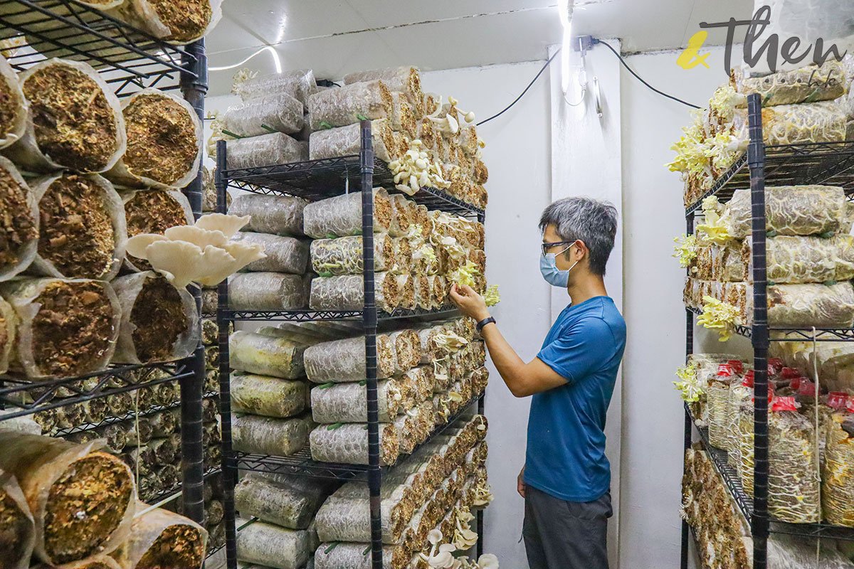 香港品牌 本土農業 本地產菇菌 香城遺菇 Russell 咖啡渣 種菇 菇包 廠房