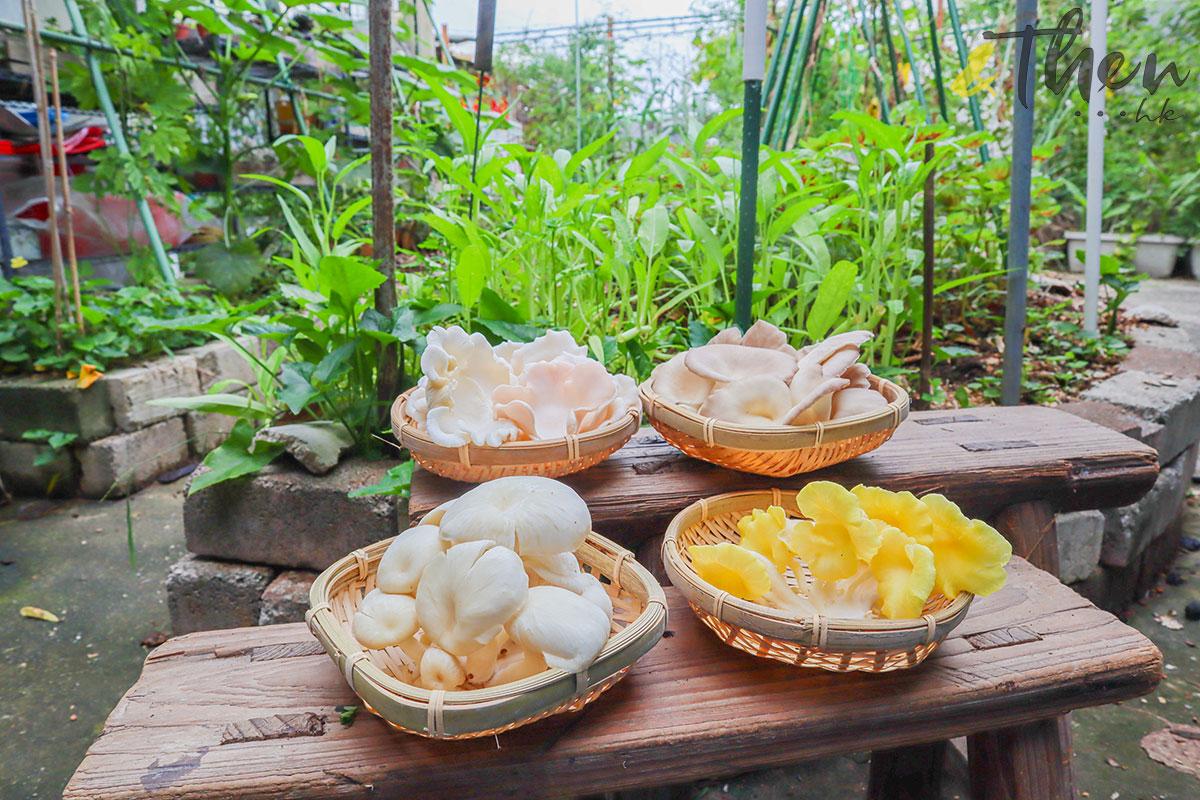 香港品牌 本土農業 本地產菇菌 香城遺菇 Russell 咖啡渣 牡丹菇 粉紅平菇 鳳尾菇 榆黃菇