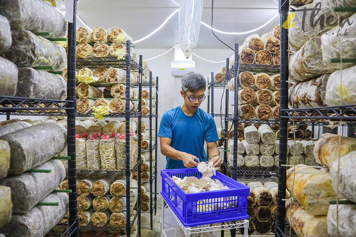 香港品牌 本土農業 本地產菇菌 香城遺菇 Russell 咖啡渣 廠房