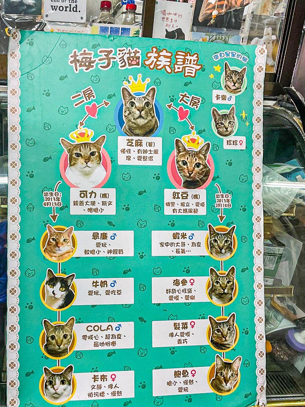 貓奴 寵物 貓Cafe 良心小店 主子 觀塘 梅子貓舍 芝麻一家 梅子貓族譜