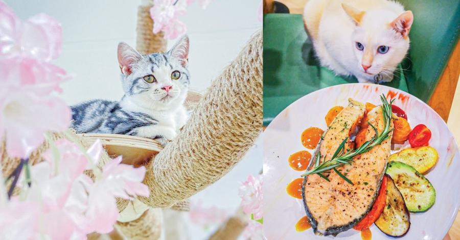 貓Cafe_FI_V2