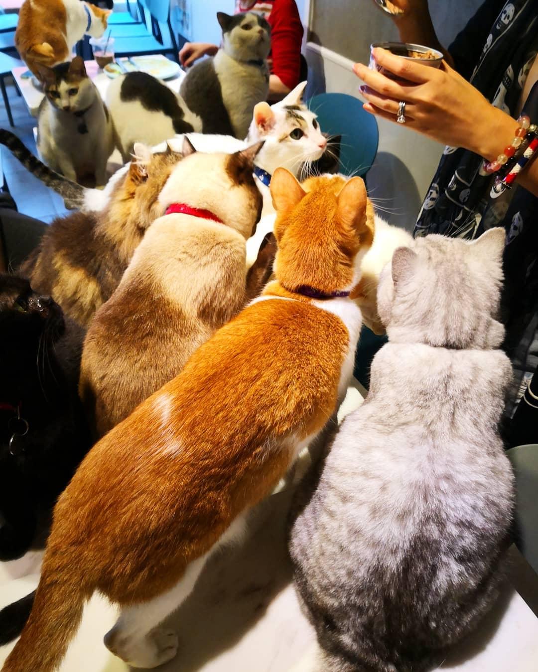 貓奴 寵物 貓Cafe 良心小店 主子 URBAN Cafe 油麻地 觀塘 貓糧 貓罐頭