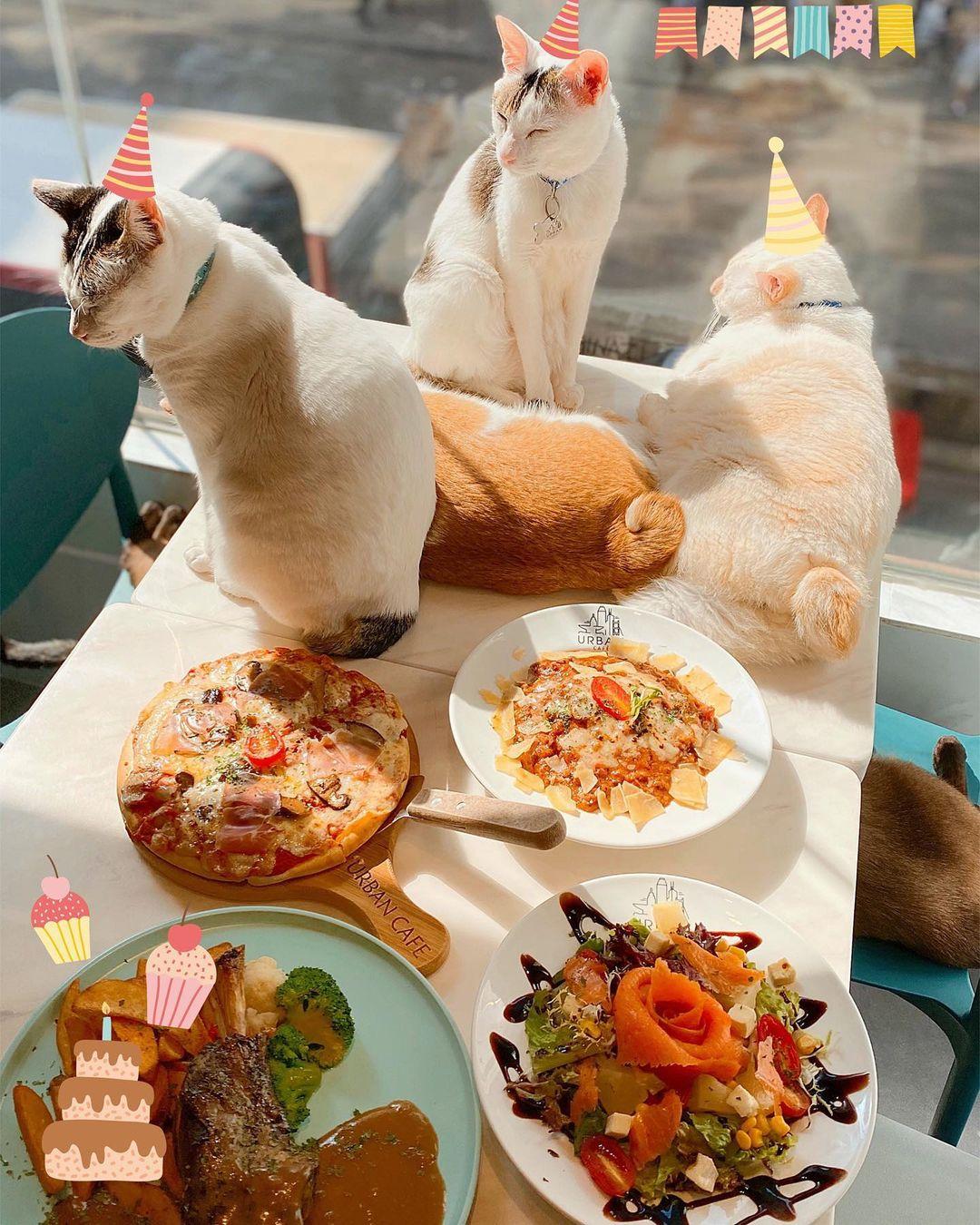 貓奴 寵物 貓Cafe 良心小店 主子 URBAN Cafe 油麻地 觀塘