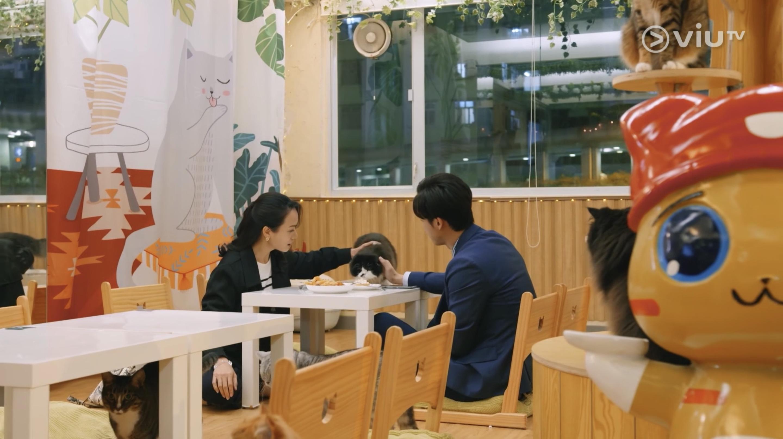 貓奴 寵物 貓Cafe 良心小店 主子 荃灣 MIRROR 大叔的愛 貓之茶房