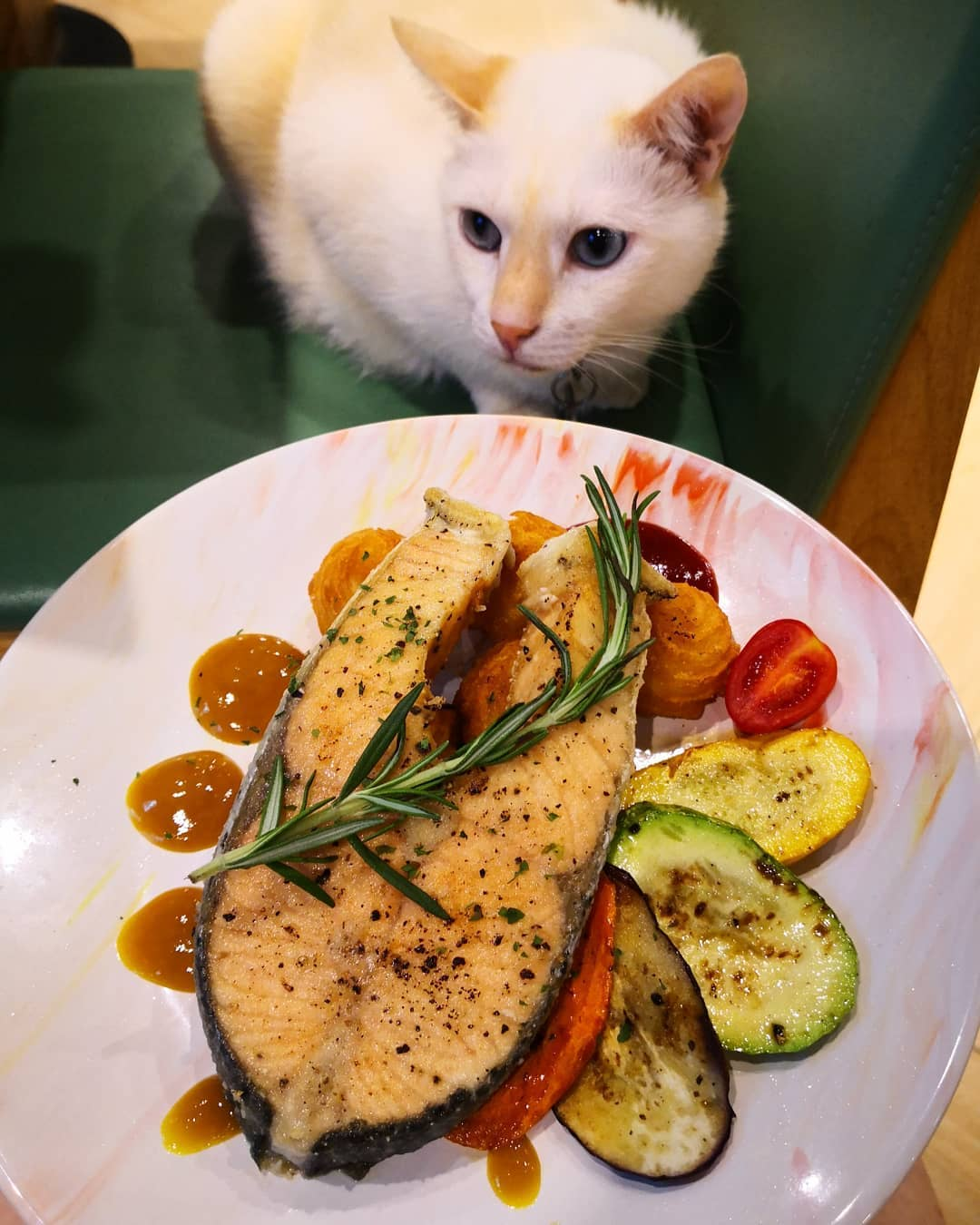 貓奴 寵物 貓Cafe 良心小店 主子 URBAN Cafe 油麻地 觀塘 慢煮三文魚配蜜糖芥末醬 三文魚