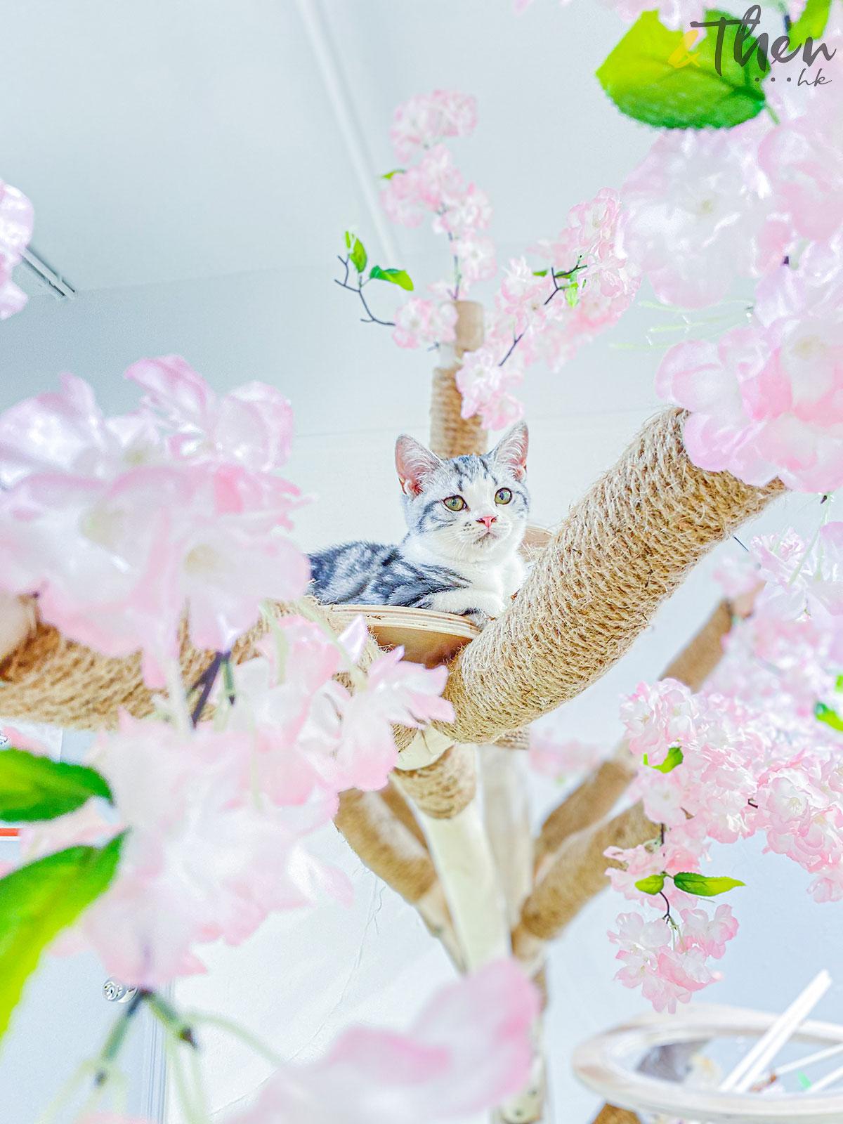 貓奴 寵物 貓Cafe 良心小店 荔枝角 主子 Catio 貓樹 攝影