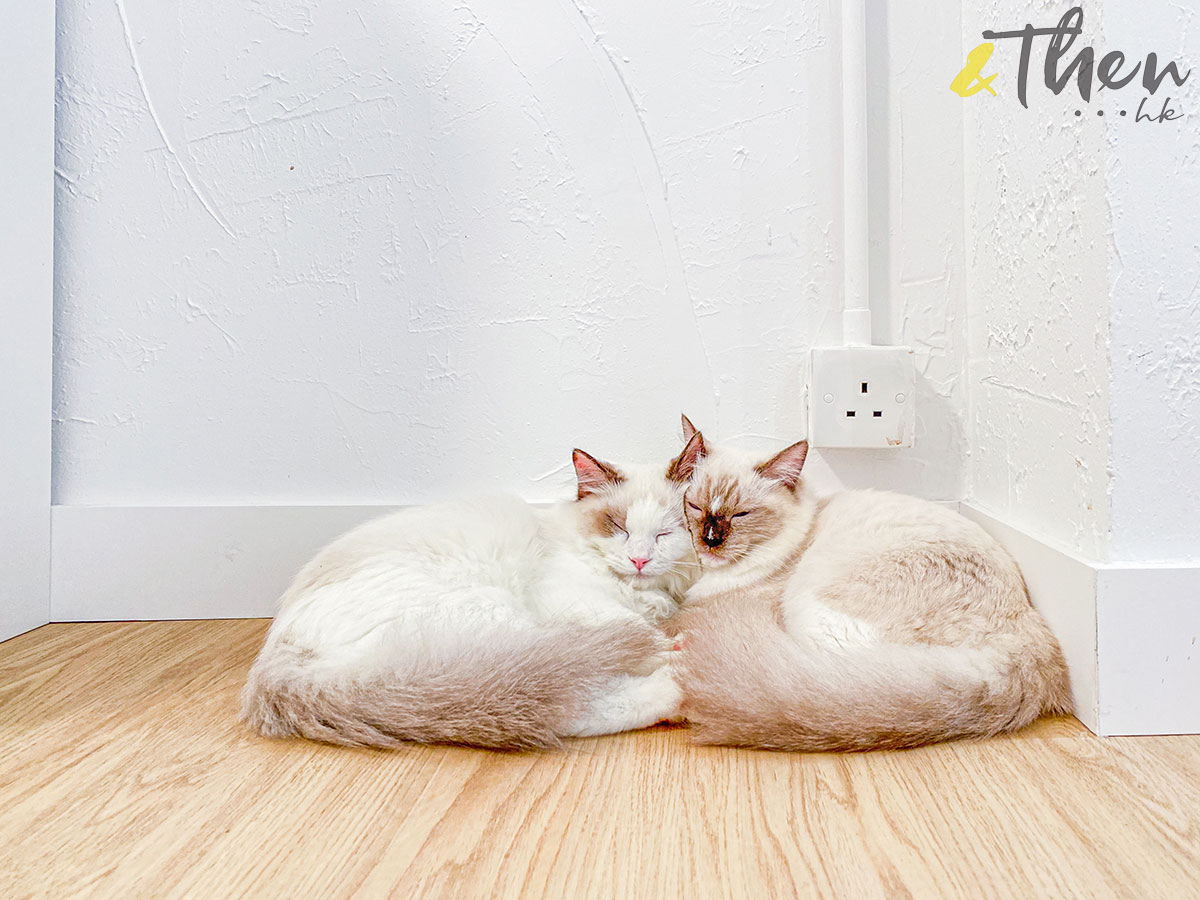 貓奴 寵物 貓Cafe 良心小店 荔枝角 主子 Catio 貓 酣睡
