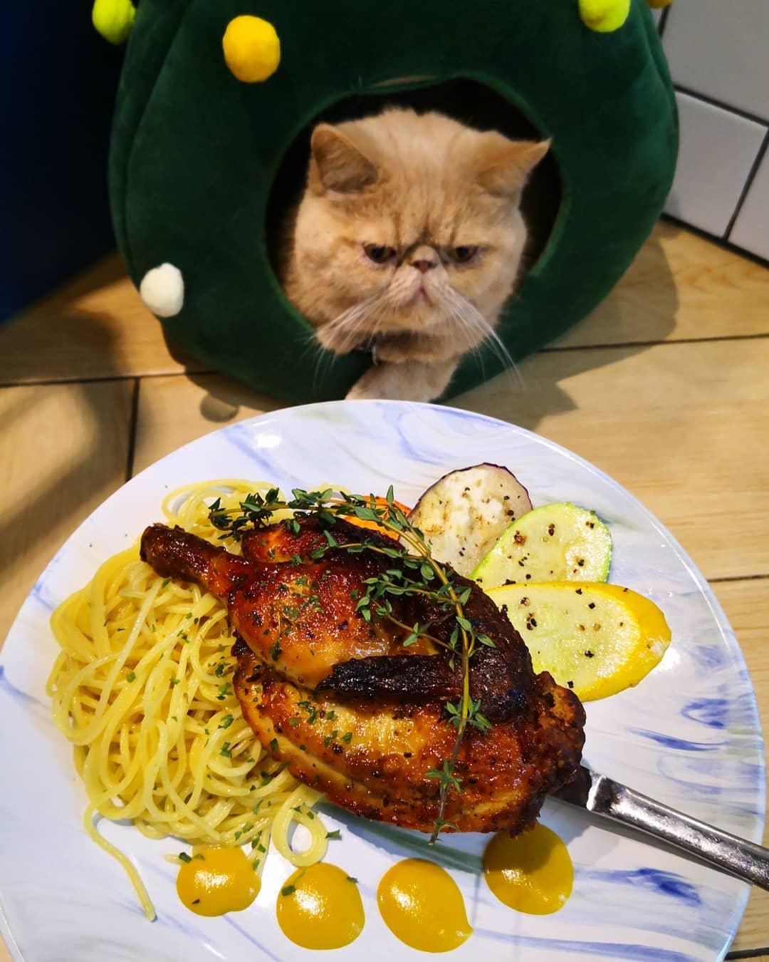 貓奴 寵物 貓Cafe 良心小店 主子 URBAN Cafe 油麻地 觀塘 蜜糖芥末汁伴香草燒春雞 燒春雞