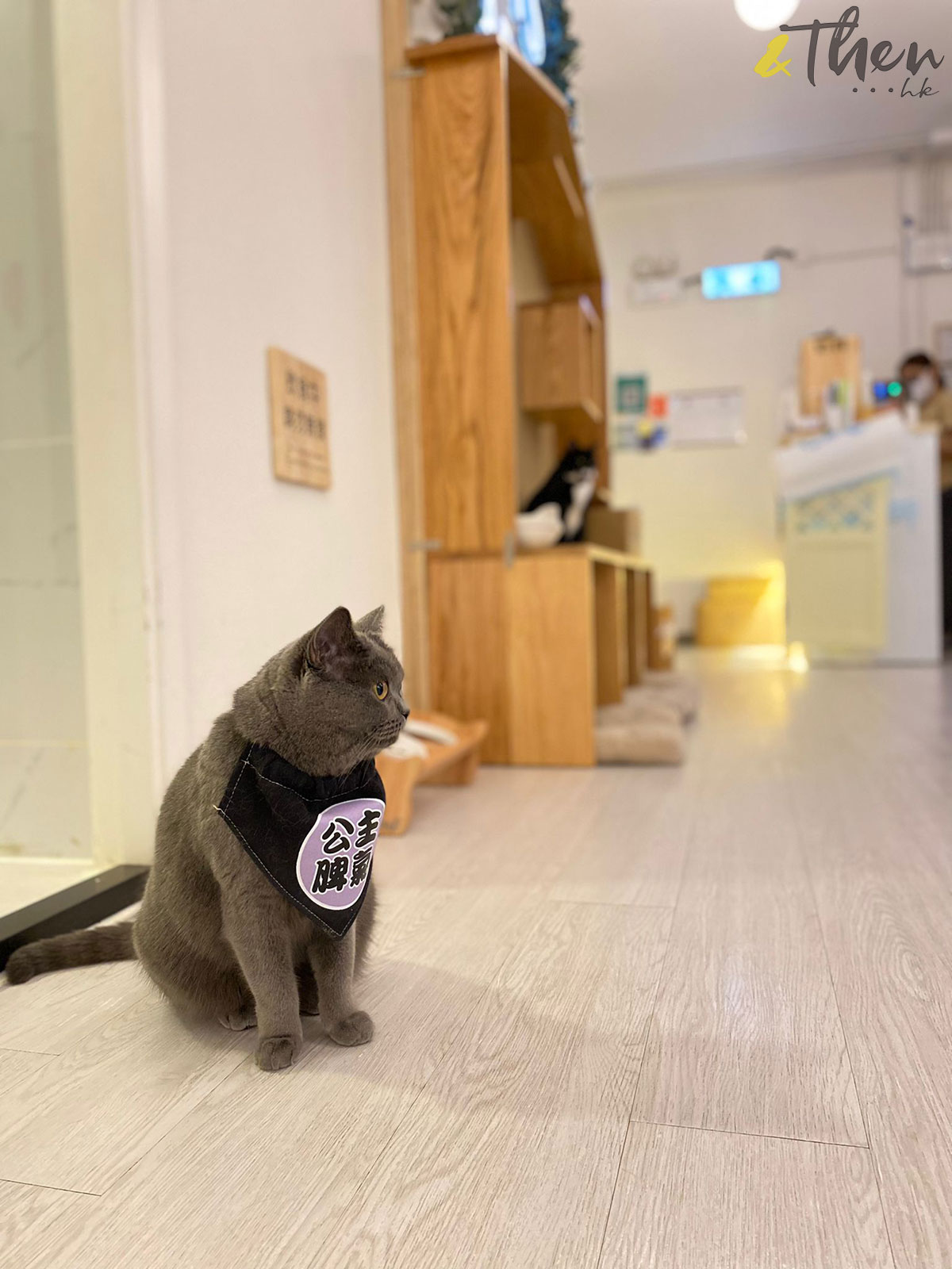 貓奴 寵物 貓Cafe 良心小店 主子 荃灣 MIRROR 大叔的愛 貓之茶房 貓貓 公主脾氣